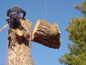 Boulder Colorado Tree Removal Employee