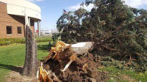 A Fallen Tree In Boulder County