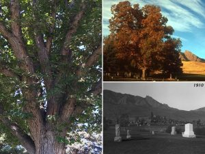 Green Mountain Cemetery Tree